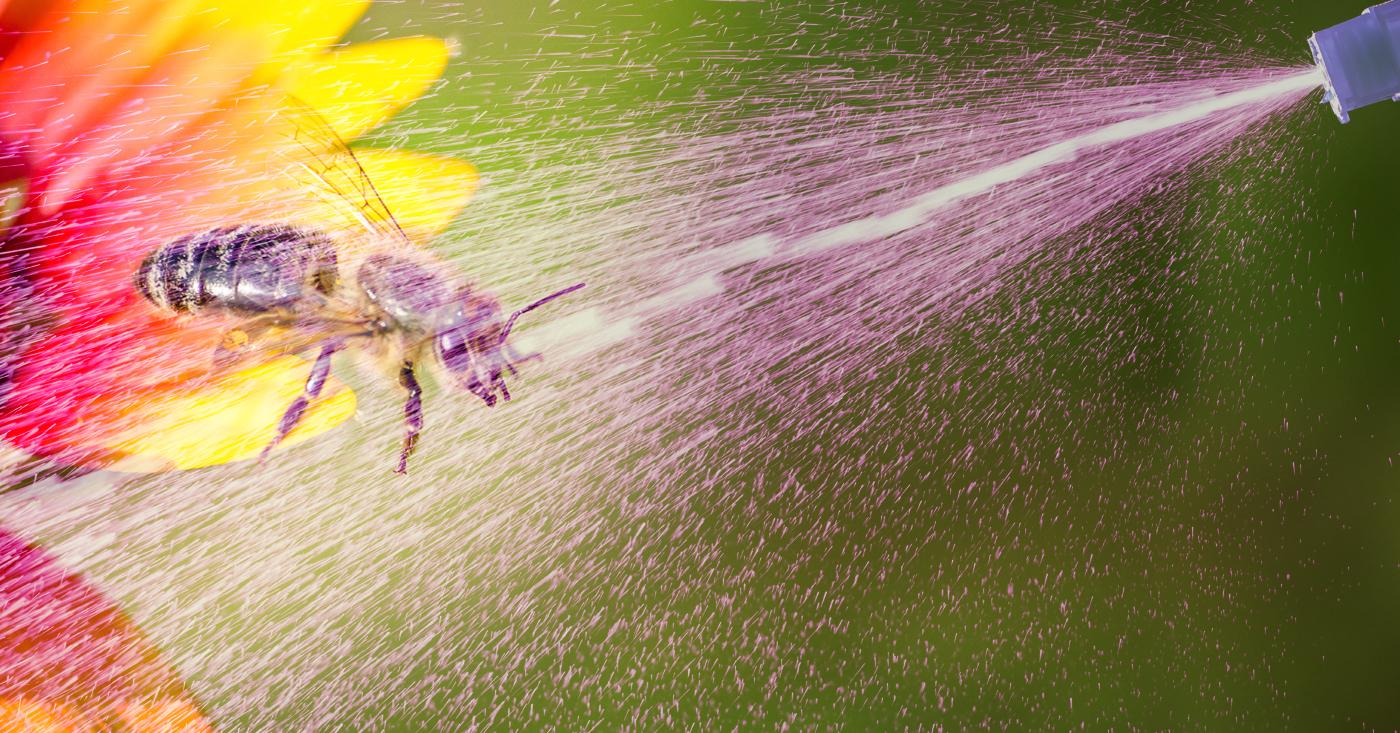 Biene wird im Flug mit Sprühflasche angespritzt