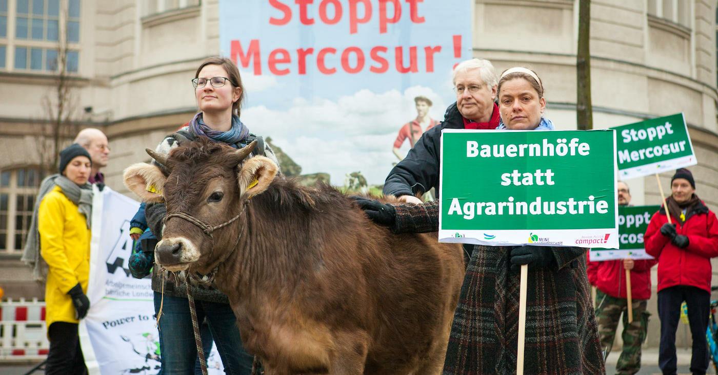 Protest mit Kuh: Campact-Unterstützer*innen protestieren gegen das EU-Mercosur-Abkommen