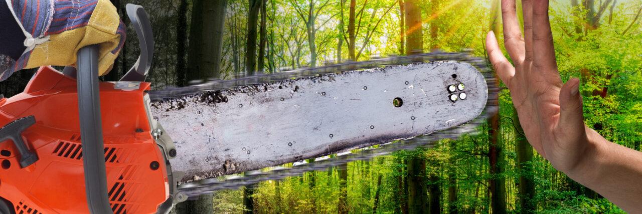 Der Dannenröder Wald soll für eine Autobahn gerodet werden. Campact startet einen Appell