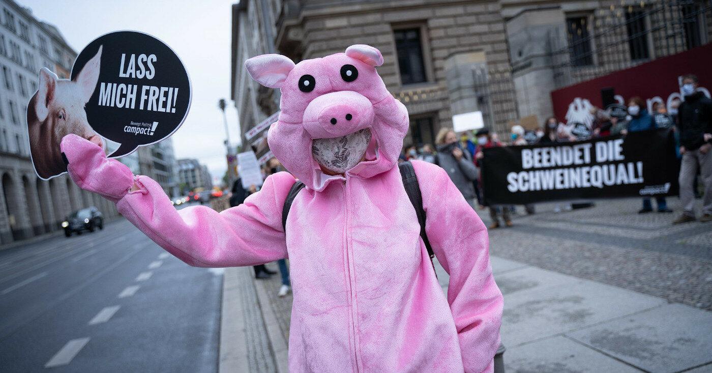 """Ein Mensch im Schweinekostüm demonstriert gegen den Kastenstand bei Sauen und hält ein Schild mit der Aufschrift """"Lasst mich frei!"""" hoch."""