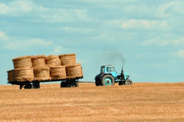 Ein Traktor zieht einen Anhänger mit Strohballen über ein abgeerntetes Feld