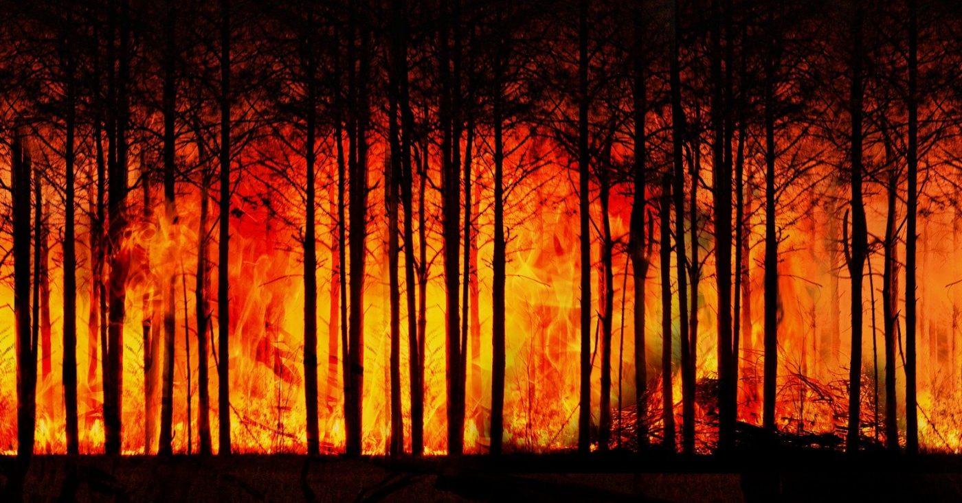 Foto: Flammen in einem Wald: Mit der Klimakrise nehmen Extremwetter mit Ereignissen wie Waldbränden immer weiter zu.